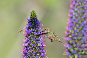 Hummingbird & Bee Pollinator Festival @ W.H. Sommer Park | Edwards | Illinois | United States