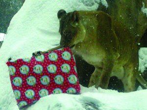 Critter Christmas @ Peoria Zoo | Peoria | Illinois | United States